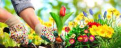 Il giardinaggio aiuta a riprendersi dai tumori
